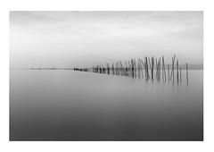 iIIiiii/////IIII (savillejoe) Tags: japan lakebiwa longexposure shigaprefecture d5 70200mm filter ndfilter bw waterscape fishingsticks