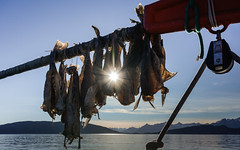 the dried fish (ciwi8) Tags: greenland grönland southgreenland südgrönland sailing yacht ocean sun sky clouds water mountains ship sunstar sparkling fish driedfish