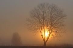 Zonsopkomst /Sunrise 9-4-17 (wilma HW61) Tags: zonsopkomst sunrise leverdusoleil solopgang mist fog nebel brouillard nebbia alba bomen tree albero arbre baum ochtendstond morn morningdew zonlicht sunlight natuur nature natur naturaleza nikond90 nederland niederlande netherlands holland holanda hattem gelderland veluwe paysbas paesibassi paísesbajos europa europe outdoor wilmahw61 wilmawesterhoud wow nwn