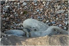 face (HP025597) (Hetwie) Tags: cap opaalkust kust frankrijk capgrisnez sea france zee capblancnez strand audresselles hautsdefrance fr