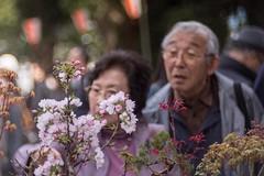 _DSC0375 (kymarto) Tags: bokeh bokehphotography bokehlicious dof depthoffield japan oldens vintagelens sony sonynex7 sonyphotography hanami park flowers wollensak velostigmat