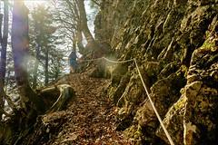 |o\ (Heinrich Plum) Tags: heinrichplum plum fuji xe2 xf1855mm weg way steig steeptrack geländer handrail berchtesgadenerland bavaria bayern fuderheuberg mountains mountain bergweg gegenlicht backlight berge alps alpen hiking
