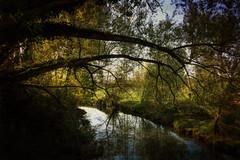 A l'ombre (koalalumpur) Tags: rivière reyssouze rhônealpesauvergne rhônealpes départementdelain ombre