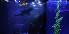 Aquarium (Belle Ballentine) Tags: aquarium newportaquarium nikond5100 water blue shark fish green plant marine animals blurry