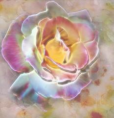 Rose-a-glow (boeckli) Tags: flowers roses abstract pastel painterly macro rose textures texturen shadowhousecreations watercolour watercolor plants pflanzen outdoor topaz topazglow glow awardtree netartii