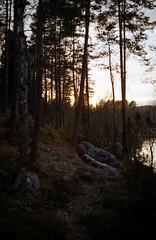 оз. Узкое, МО Кузнечное, Ленинградская обл. (MatveyKarmakov) Tags: lake nature colors landscapes nikon kodak 35mmfilm nikonfg 50mmlens