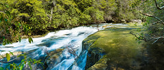 Savage Gulf (F. Marcus C) Tags: trees panorama green nature water creek forest landscape whitewater stream hiking tennessee rapids hdr luscious savagegulf hdrpanorama