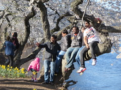 Family posing on the branch of a cherry blossom tree at the Essex County Cherry Blossom Festival Branch Book Park, in Newark, New Jersey USA (RYANISLAND) Tags: park new pink flowers trees flower tree japan cherry outdoors japanese newjersey spring cherries blossom essexcounty blossoms nj jersey cherryblossom cherryblossoms newark essex springtime citypark yoshino cherrys floweringtree floweringtrees cherryblossomfestival colorpink newarknewjersey newarknj pinkcolor