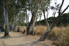 Nam Sang Wai (mawingchung,,) Tags: china park sky macro tree hongkong nikon hong kong  kowloon    d800e