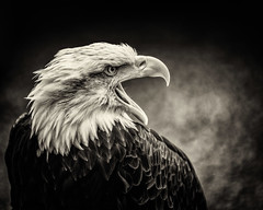 DSC07932-Edit (jamestux) Tags: light portrait bw white black bird birds natural plate