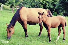 Me and my mom! (K Cruz) Tags: family horses horse familia mare cavalos cavalo gua potro foal equino equinos kcruz horsekcruz an