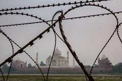 Razor Wire at the Back of the Taj 7785 (Ursula in Aus) Tags: india taj tajmahal agra unesco rajasthan uttarpradesh earthasia