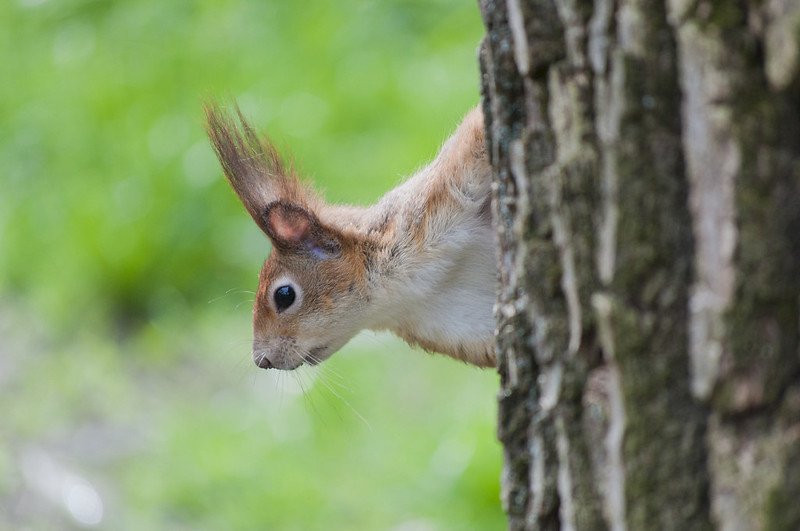 """I am not a squirrel<a href=""""http://www.flickr.com/photos/28211982@N07/14036449032/"""" target=""""_blank"""">View on Flickr</a>"""