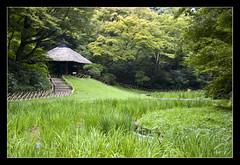 Meiji Shrine @Tokyo, Japan (brunombo) Tags: park travel trees parco tree verde green grass japan alberi forest tokyo shrine pentax path erba tamron viaggio giappone meiji foresta meijishrine cammino tamronaf18250mmf3563diiildasphericalifmacro justpentax