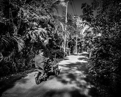 Jungle Road - Bangkok (Nathan A Rodgers) Tags: travel blackandwhite bw thailand asia southeastasia bangkok streetphotography countries streetscenes 2012 travelphotography