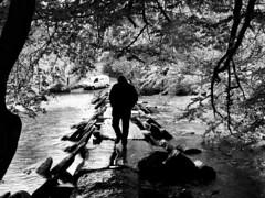 Tarr Steps (adam_moralee) Tags: park bridge trees shadow portrait bw white man black male adam nature water leaves rain silhouette river dark walking blackwhite interesting darkness stones steps wb explore national finepix fujifilm tarr exmoor explored s1500 moralee adammoralee adammoalee