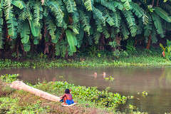 The last adventure (Catch the dream) Tags: girl rural child ducks bangladesh ruralscene chuadanga