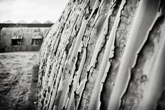 IMGP8139 B&W (big_ianpaulbullivant) Tags: colour architecture landscapes ruins air rustic lincolnshire dereliction bases binbrook rafbinbrook blackandwhitepentax artaficionadosold