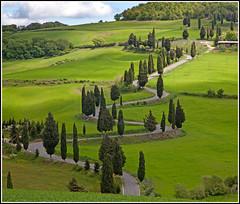 Cypress Avenue (CliveDodd) Tags: italy tuscany cypress monticchiello