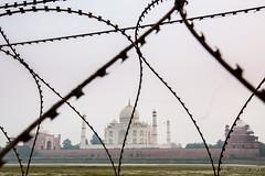 Razor Wire at the Back of the Taj 7784 (Ursula in Aus) Tags: india taj tajmahal agra unesco rajasthan uttarpradesh earthasia