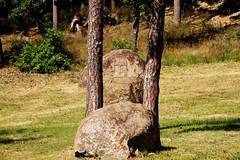 notch and bead sights (Jules Marco) Tags: trees nature stone canon austria countryside sterreich forrest natur landschaft stein bume niedersterreich waldviertel loweraustria woodquarter eos600d tamron18270mmf3563diiivcpzd
