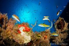 multicolor (Jaime Franch) Tags: peces diving formentera buceo baleares submarina laplataforma thalassomapavo tokinaatx107dxfisheyeaf1017mmf3545 mediterraneo visemanafotografiasubmarinaformentera