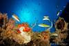 multicolor (Jaime Franch) Tags: peces diving formentera buceo baleares submarina laplataforma thalassomapavo tokinaatx107dxfisheyeaf1017mmf3545 mediterráneo visemanafotografíasubmarinaformentera