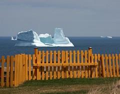 Beyond the Fence (Karen_Chappell) Tags: fence ice iceberg newfoundland nfld yellow ochrepitcove avalonpeninsula ocean white blue atlantic atlanticcanada canada landscape seascape scenery scenic gate