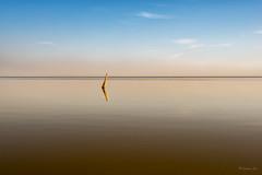 Stick (Lee168) Tags: lake horizon stick saltonsea