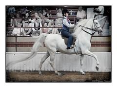 Brainne and Magic Surprise (GAPHIKER) Tags: newyork texture magic syracuse horseshow 2014 hss saddleseat magicsurprise happyslidersunday lenabemanna syracuseinternationalhorseshow2014