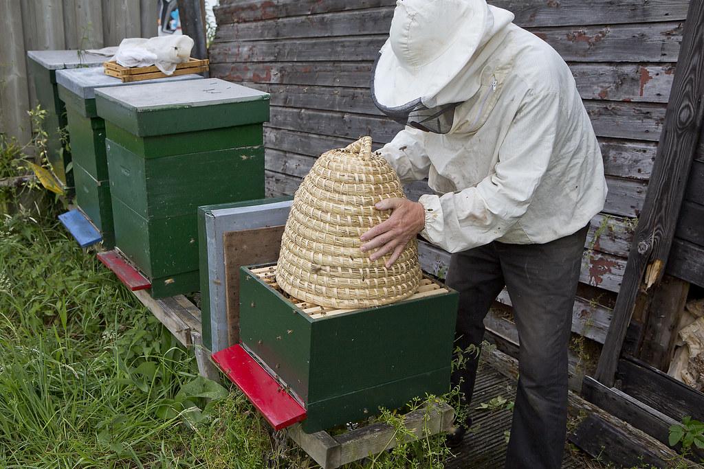 bijen overlast
