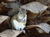 Squirrel with a nut (ashabot) Tags: animals squirrels florida critters cuteanimals
