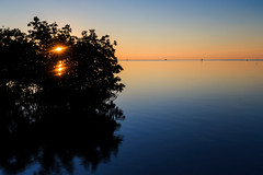 Sun's Rays Through The Mangroves Canopies (Alex Galiano) Tags: sea sun tree water ray unitedstates florida mangrove sunsetandsunrises