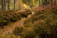 Little Garve, The Scottish Highlands (Peter Greenway) Tags: autumn woodland river landscape scotland countryside inverness rushingwater scottishhighlands littlegarve
