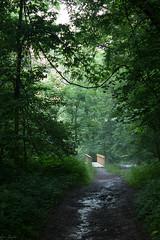 Come WIth Me (SerpaDesign) Tags: bridge trees summer sunlight mist nature rain fog mud branches vine trail leafs muddy tannerserpa serpadesign