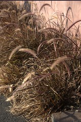 californa venice (pineider) Tags: california usa nikon topless venicebeach d800