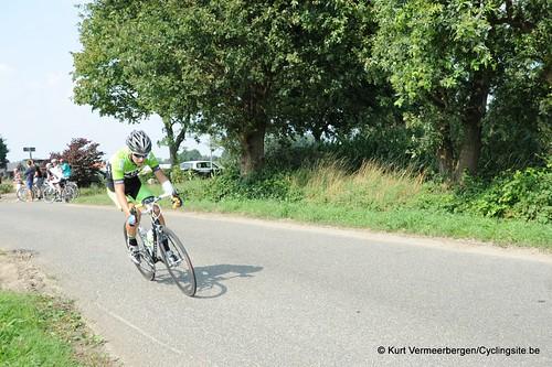 Geel Oosterlo  (93)