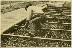 Anglų lietuvių žodynas. Žodis seedage reiškia n ž. ū. augalų dauginimas sėklomis ar sporomis lietuviškai.