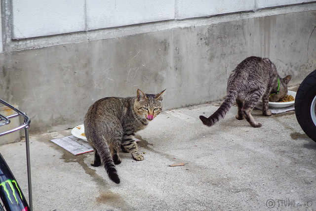Today's Cat@2014-08-01