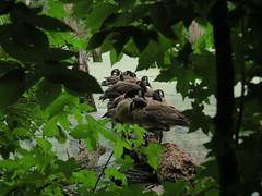 Voyeur #1 (Keith Michael NYC (4 Million+ Views)) Tags: nyc ny newyork statenisland mountloretto mountlorettonorthwoods