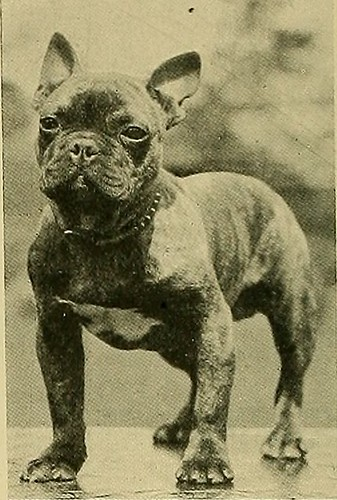 """Image from page 247 of """"Animal Life and the World of Nature; A magazine of Natural History"""" (1902)"""