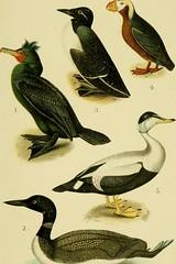 Anglų lietuvių žodynas. Žodis man-of-war bird reiškia vyras-karo paukštis lietuviškai.