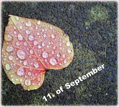 raindrops ~ looking like joyful tears ( the-best-is-yet-to-come ) Tags: natur blatt herz regen tropfen badhonnef estremit explorewinnersoftheworld flickrbestpics vosplusbellesphotos flickraward thebestofmimamorsgroups blinkagain