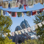 Disney's Animal Kingdom - Expedition Everest thumbnail