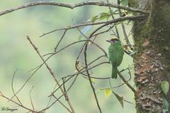 IMG_7756_DS (Ganugapenta NaveenKumar Reddy) Tags: northeast northeastindia mishmihills canon7d disnapper guyonblackybx gnaveenkumarreddy ganugapentanaveenkumarreddy gnr ganugapenta