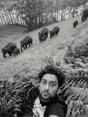 Wilderness (abhishekskumar) Tags: elephants herd family familylove wild awesome lovely splendid forest grass infant safari planetearth