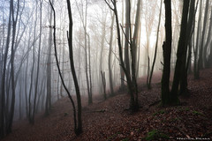 Enchanted forest (Hector Prada) Tags: forest autumn magic enchanted trees lights shadows sunlight leaves fall leaf bosque otoño magia encantado arboles niebla fog mist misterious basque country
