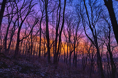 Woods at night (Kansas Poetry (Patrick)) Tags: lake clintonlake fire rangeburning smoke lawrencekansas kansas color patrickemerson