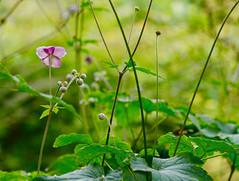 Flowers. (ost_jean) Tags: flowers plants nikon d5200 tamron sp 90mm f28 di vc usd macro 11 f004 ostjean