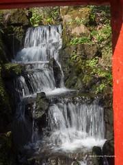 Clyne Gardens 2017 04 07 #5 (Gareth Lovering Photography 3,000,594 views.) Tags: clyne gardens swansea park olympus omdem10ii 14150mm garethloveringphotography